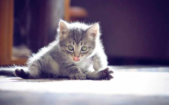funny, котенок, nice, para, gatos, gato, свет, pictures, parede,