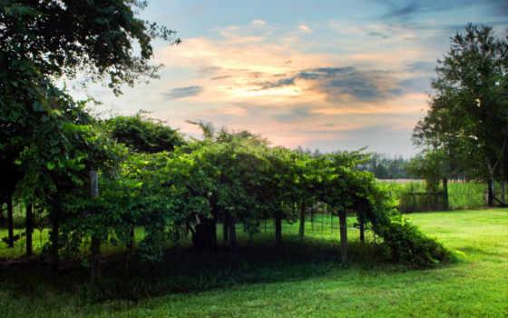 natural, scene, природа, free,