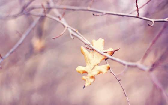 осень, leaf, природа, оригинал, поездка, aljanh, фон, screensavers,