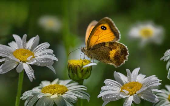 cvety, красивый, subscribe, цветы, когда, бабочка, postcard, абонент, анимация, коллекция, animate