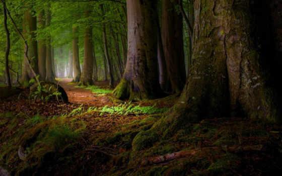 root, landscape, дерево, мох, leaf, тропинка, fore, mist
