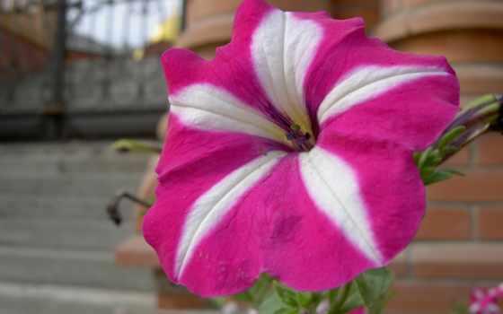 цветы, природа Фон № 2239 разрешение 1920x1080