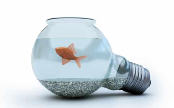 blue, photo, with, concept, light, bulb, goldfish, activités,