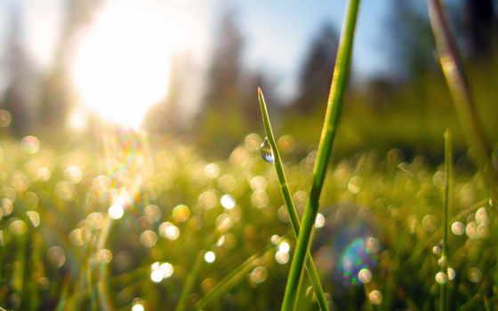 утро, природа, трава