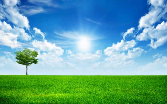природа, mobile, зелёный