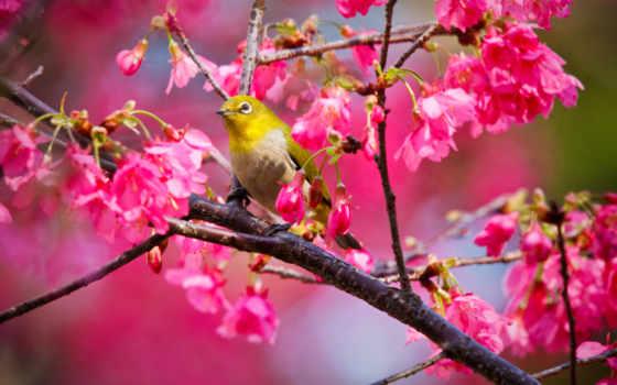 parede, papel, pássaros