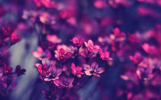purple, цветы, хорошо, branch, картинка, листва, розовый, tumblr, макро,