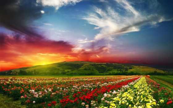 цветов, many, невероятно, barne, много, назад,