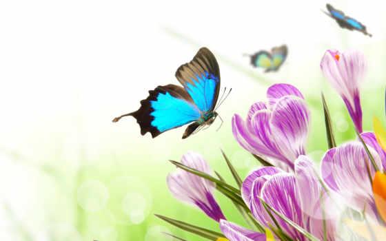 бабочки, бабочка, скинали, flw, cvety, фотообои, картины,