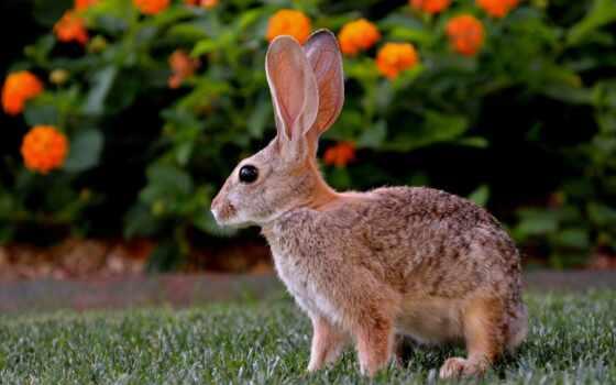 зайцы, live, заяц, сколько, красивый