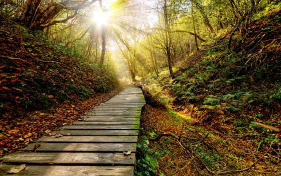 закат, color, rays, трава, тропинка, sun, leaf, картинка, небо, листва,