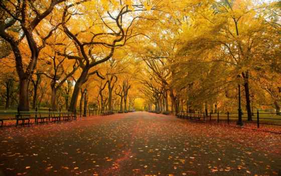 new, york, город, park, центральный, нью, best, осень, пасть,