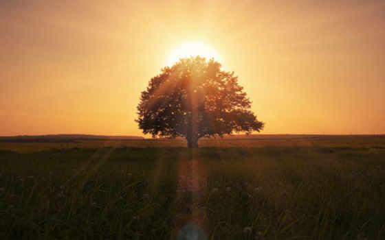 солнца, house, treasure, йога, фри, royalty, will,