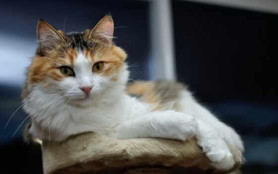 кошка, kot, kimrik, узкий, загрузить, хорошії, shirokoformatnyi, коты, большой, чёрный, кот