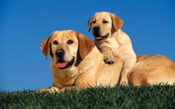 собаки, взгляд