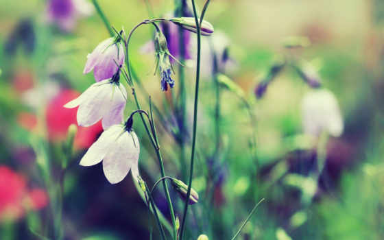 цветы, нежность, колокольчики, растения, нежные, букет, природа, розы,