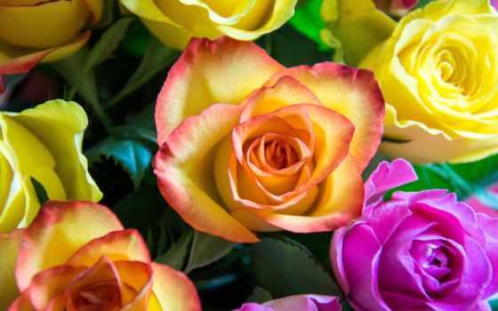 kwiaty, tapety, цветы, картинка, roses, изображение, black, розовый,