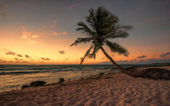 пляж, palm, вечер, море, мексиканский, птица,