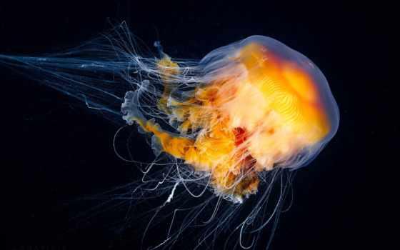 jellyfish, марианской, впадине, медузы, unknown, морских, aurelia, стажировки, медуз, взгляд, you,