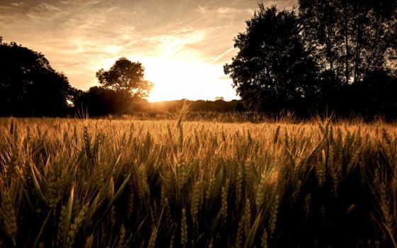 ди, аль, campo, tramonto, grano, subtitulado, sfondi, español, gratis, pin, gogh,