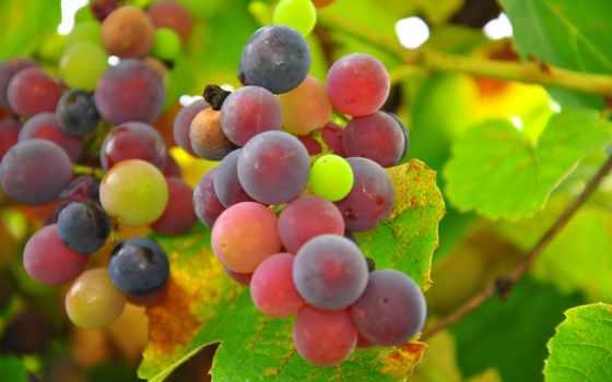 плоды, дерево, potted, виноград, растение,