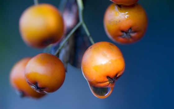 ягоды, макро, оранжевые, капля, ягода, осень, растение, картинка, еда, трава,