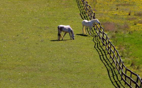 ultra, поле, summer, кони, horses, home,
