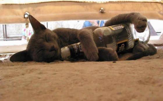 кот спит с бутылкой