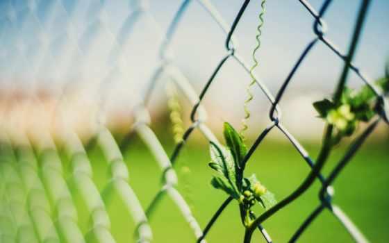 макро, широкоформатные, листья, забор, заставки, бесплатные, красивые,
