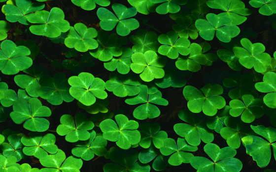 clover, jungle, leaf