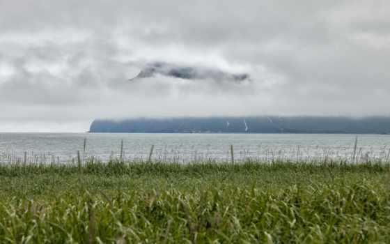 туман, россия, камчатка, трава, природа, peninsula, zoom,