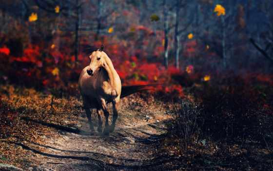 лошадь, пасть, free, лошади, pictures,