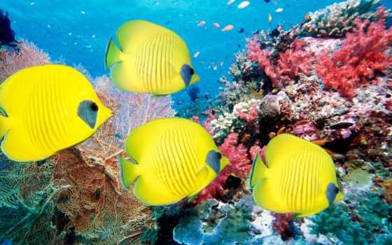 море, рыбки, кораллы