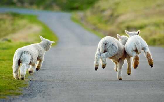 весна, день, animal, впервые, happy, march, meme