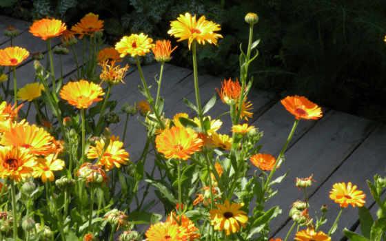 цветы, slike