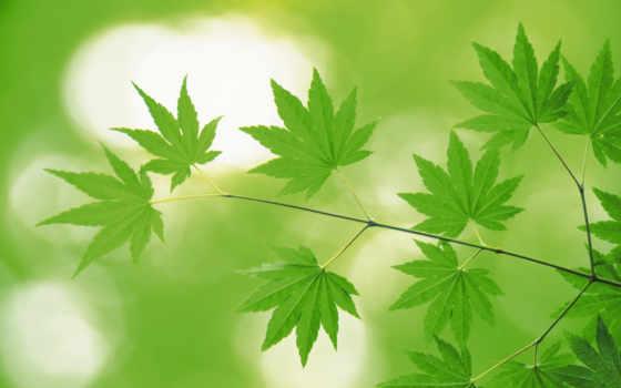 зеленые, листья
