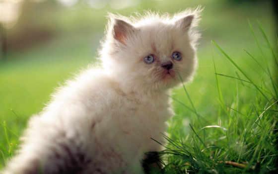 котенок, kot, кошка, трава, кот,