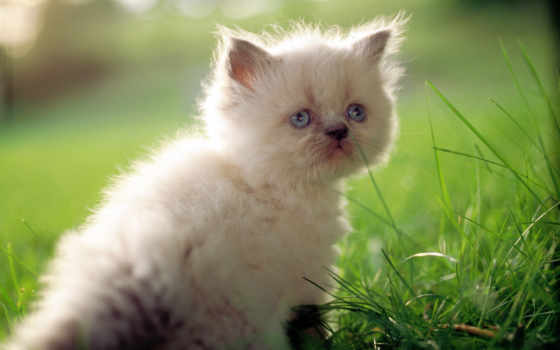 котенок, kot, кошка