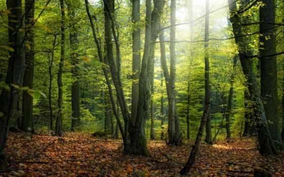 осень, деревя, листья
