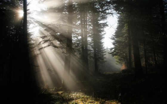 природа, лес, rays, свет, fondos, imágenes, rádio, сол,