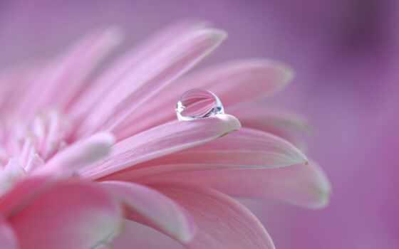 цветы, drop, роса, макро