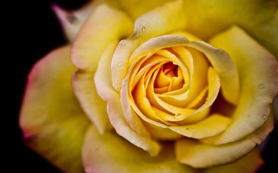 makro, цветок, макро