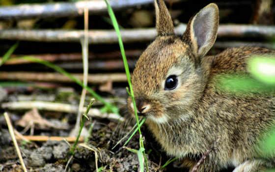 кролик, кролики, испуг, small,