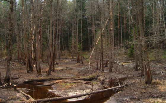 secos, bosque, arboles, pantalla, fondos, лес, trees, закат, уныние,