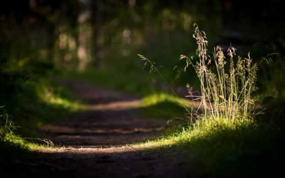 макро, природа, трава, свет, дорога, лес,
