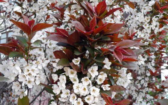 flowers, miscellaneous, cvety, природа, desktop, wallpapershd, white,