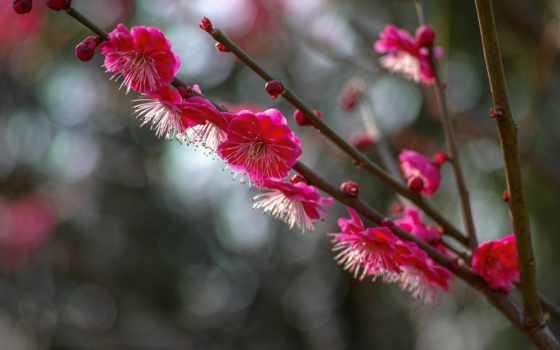 apk, цветочек, modes, hedgecam, хорошего, весна, возможностями, расширенными, видеокамера,