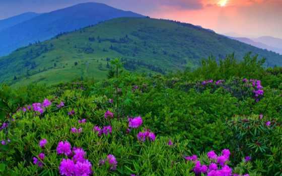 cvety, гора, color, landscape, природа, схема, закат, красивый