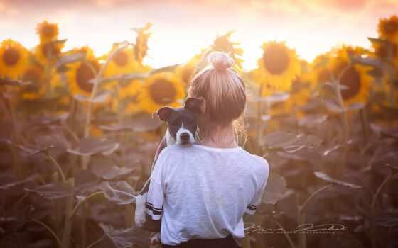 собака, спина, подсолнух, девушка, blonde, настроение, цветы