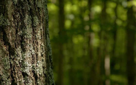 дерево, кора Фон № 8906 разрешение 1920x1080